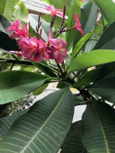 サロンの植物